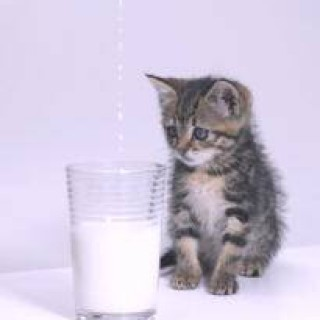 rp_cat-milk.jpg